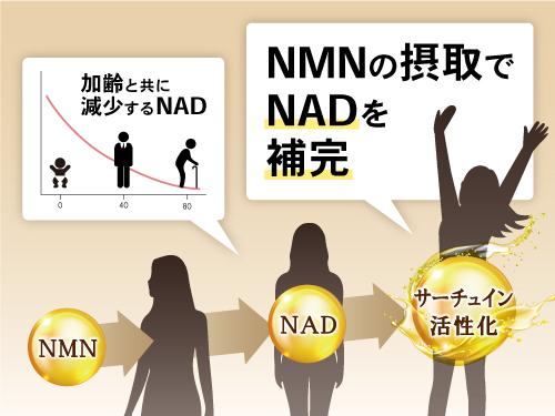 NMNの働き